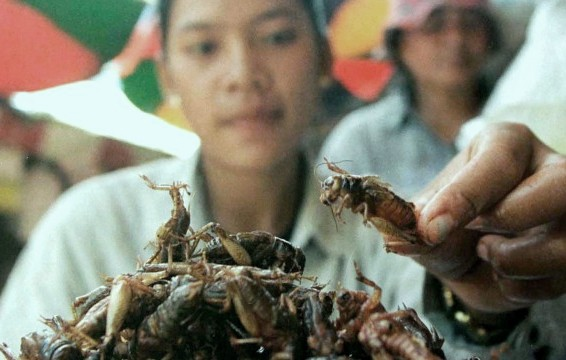 New Weight Loss Option eat Insects